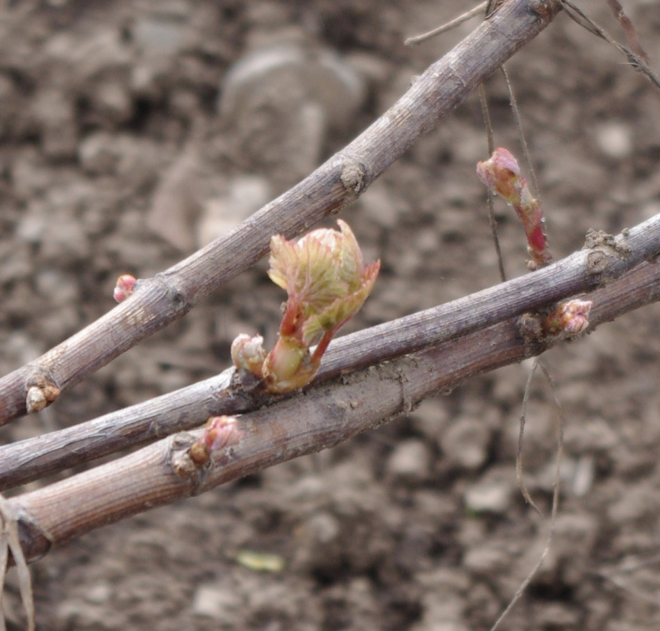 buds may 11 2013_edited-1