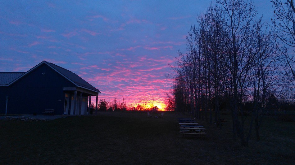 Sunrise at the winery Spring 2015